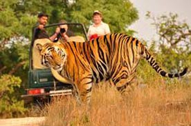 India Wildlife Tours Package